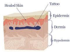 capas de la piel
